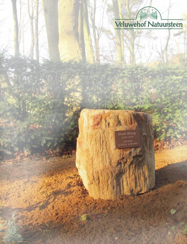 R73 – Grafsteen versteend hout