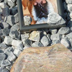 Grafsteen voor honden